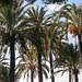20161102 122826Hw [R~E] Hotel Atalaya Park, Estepona, Andalusien, Spanien