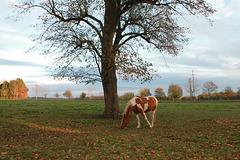 un avant goût de l'automne ......