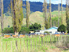Valley Farm.