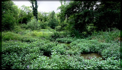 Zone humide d'Estouy / Estouy Wetland