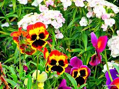 Floral Faces.