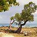 Image de Madagascar (110)