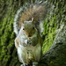 Squirrel in the woods..