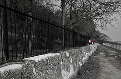 Spaziergang im Weinberg - HFF - mit PiP