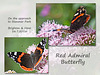 Red Admiral near Stanmer Park 26 7 2016