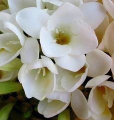 1000 fleurs sur Ipernity / 1000 flowers on Ipernity