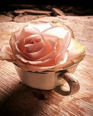 La rose thé !