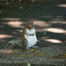 Squirrel on the road..with no intention of moving