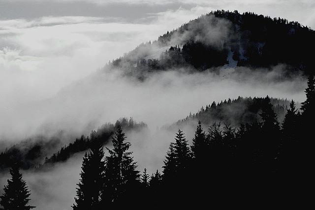 Nebel im Bergwald