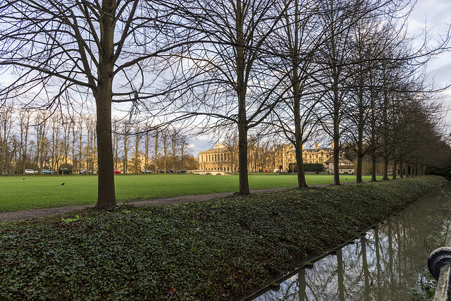 Trees and Trinity College