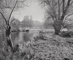 Derbyshire Wye - Willows above the Lip of Black Barn Weir