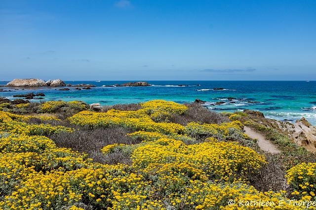 Monterey 17 Mile Drive 004