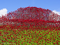 Poppies: Wave..........Fort Nelson, Portsmouth (4)