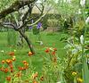 Un joli petit jardin / A lovely small garden