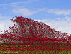 Poppies: Wave..........Fort Nelson, Portsmouth (6)