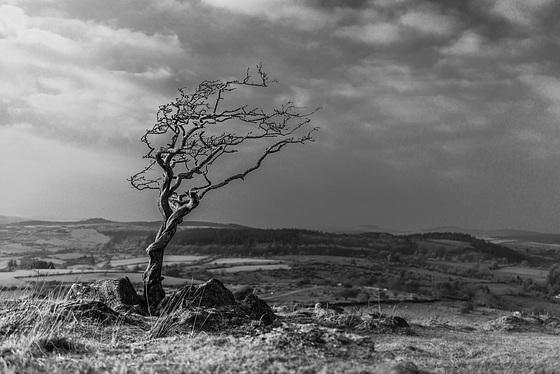 Dartmoor - 20160322-2