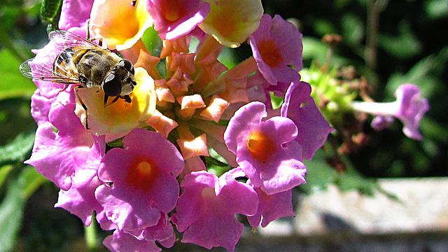 0439 intimas flores