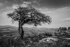 Dartmoor - 20160322