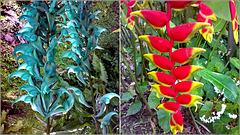 St.Lucia : Soufrière, Diamond Botanical Gardens - tropical flowers