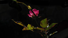 0440 intimas flores