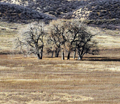 Winter Trees - Cathy Fromme Prairie Natural Area; City of Fort Collins Natural Areas