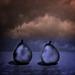 pear drama