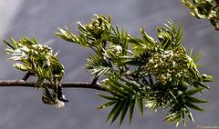 Baum vorm Fenster: Der Winter kehrt zurück (PiP)
