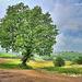 Un bellissimo albero a cavallo tra la Val Parma e la Val Baganza