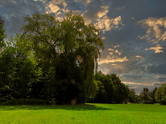 1 (37)....austria ...forest sunrise clouds