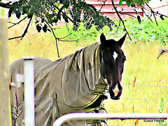 Horse Under Cover