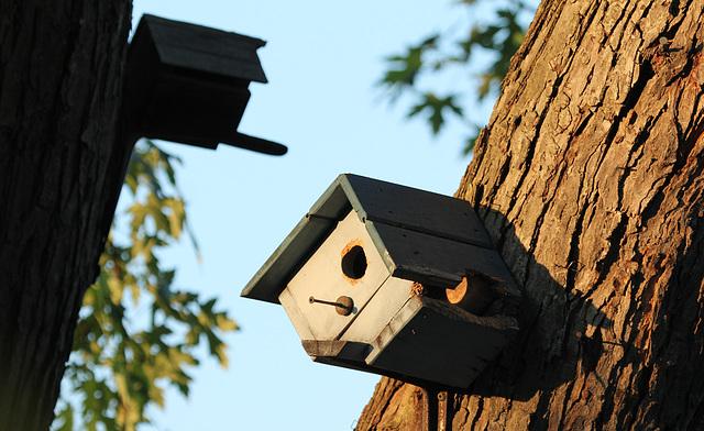 easy access model birdhouse