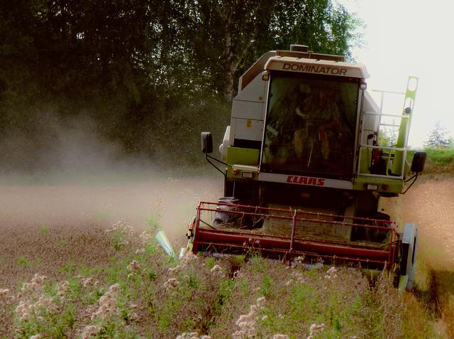 Erntezeit ...  Harvesttime ...  Temps de la moisson ...