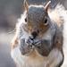 Squirrel posing32