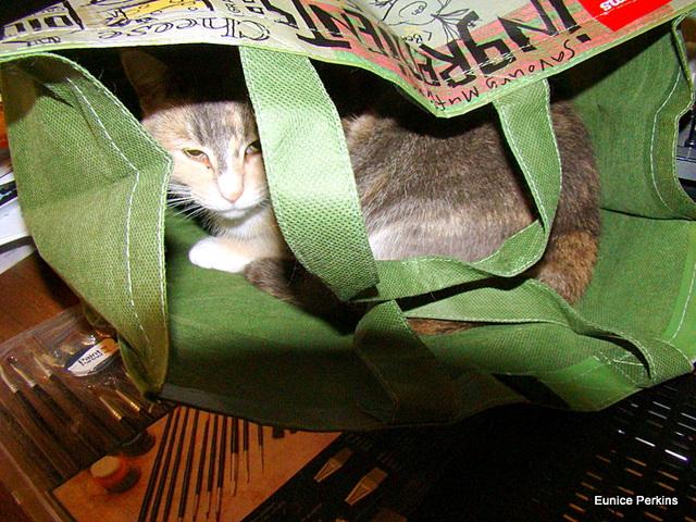 Bagged.