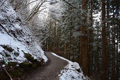Japan, The Trail along the Gorge of Jigokudani