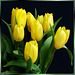 First Tulips... ©UdoSm
