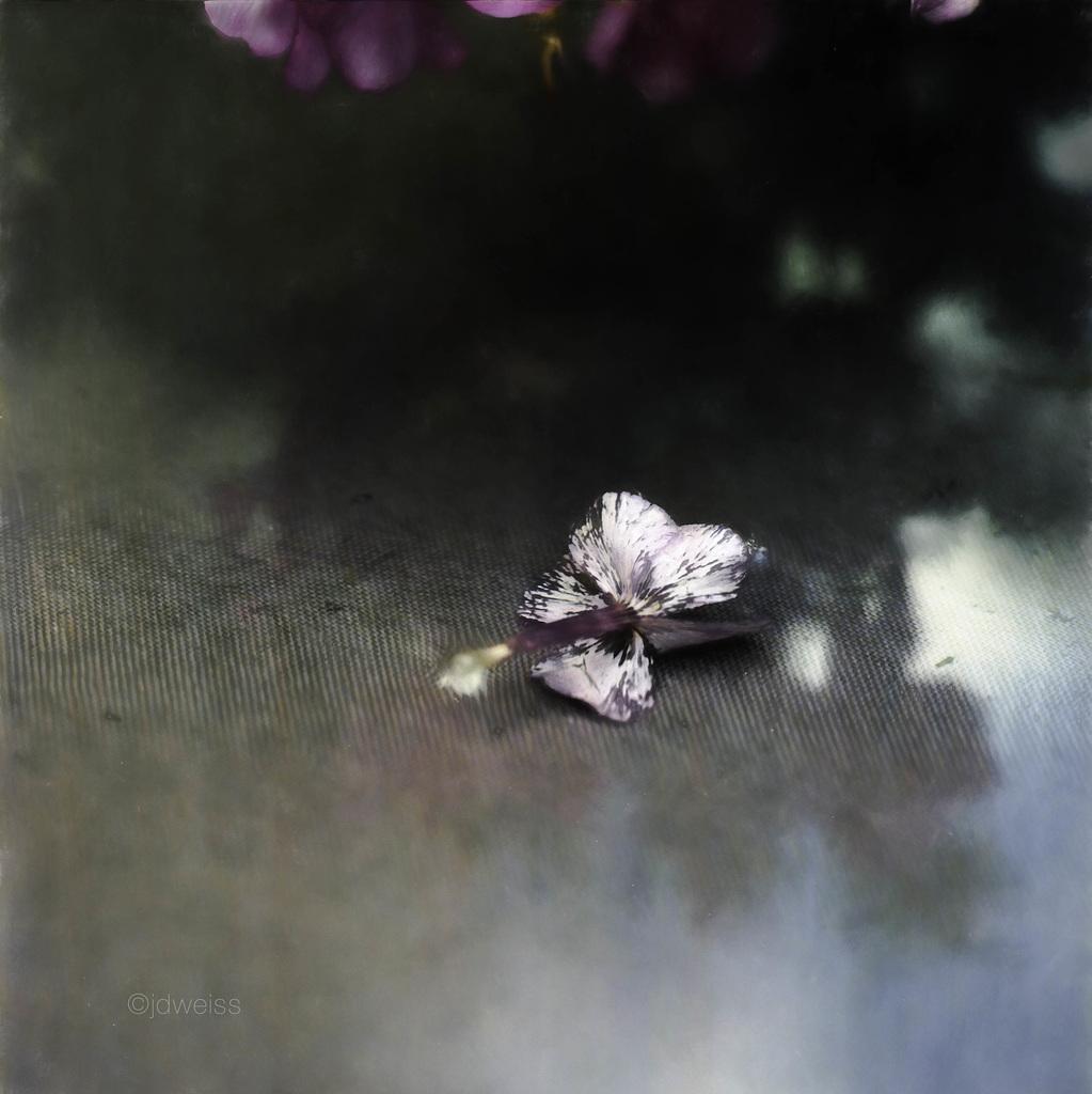 faded blossom