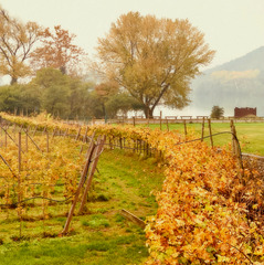 Vineyard fences