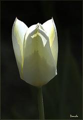 Allumer la tulipe.