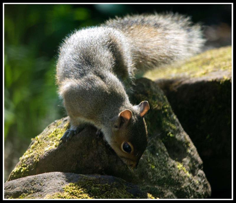 Squirrel rock climbing