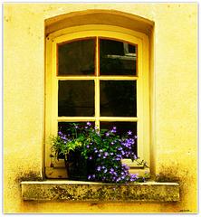 ...yellow window...