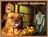 Dana vous souhaite un happy Halloween ! [ON EXPLORE]