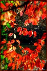 Jet de feuilles