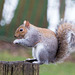 Squirrel showing off its balance