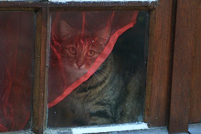La vitre malpropre , l'éclairage limite , mais quel doux regard .