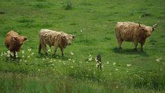 Highland Fence Fringes