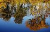 Der Herbst steht Kopf - Autumn upside down - L´automne est tombé sur la tête