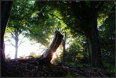A Star in de woods