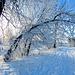 Winter, winter, winter!