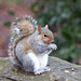 Squirrel with its nuts